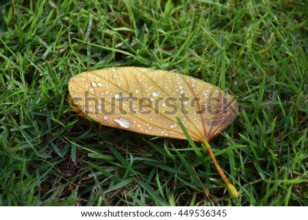 Water drops on dry leaf with green grass background  - stock photo