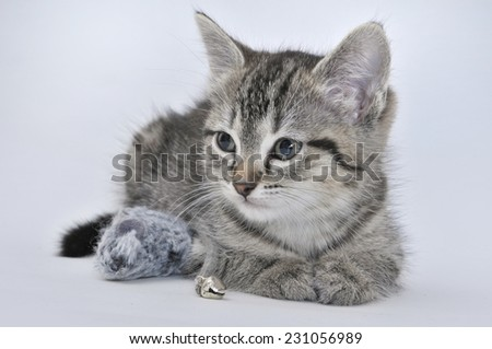 8 week old kitten with toy mouse - stock photo