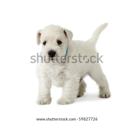 5 weeks old puppy - stock photo