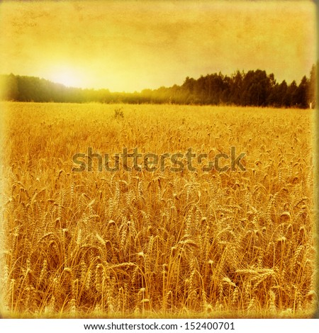 Wheat field and at sunset in grunge and retro style. - stock photo