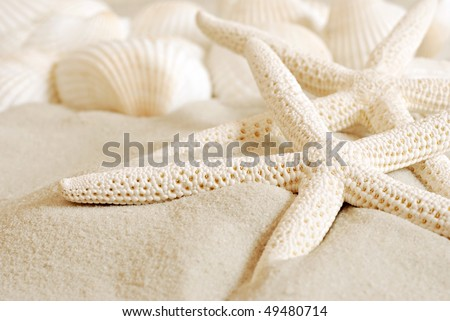 White finger starfish and seashells on white sand.  Macro with extremely shallow dof. - stock photo