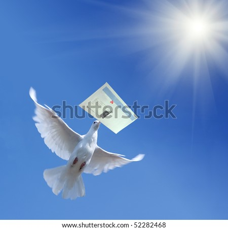 White Homing pigeon with letter - stock photo