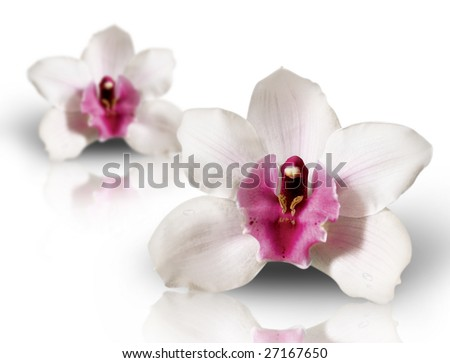 ''white orchideas''