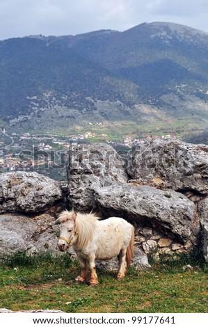 White pony in mountains - stock photo