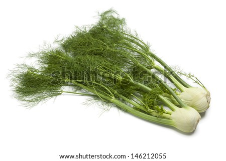 Whole fennel bulbs with green foliage on white background - stock photo