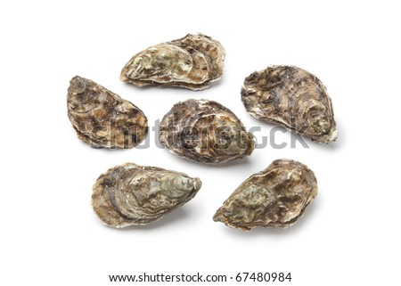 Whole fresh raw oysters on white background - stock photo