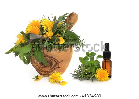 Wild dandelion and gorse flowers with sage, rosemary and lemon balm herbs, in an olive wood mortar with pestle and aromatherapy essential oil glass bottle, over white background.