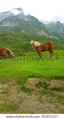 Wild Horses Grazing in the High Mountains of the Col De Soulor, French Pyrenees, June 2011 - stock photo