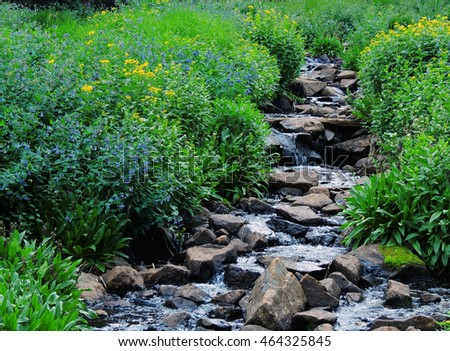 wildflowers and creek in the    indian peaks wilderness area, colorado