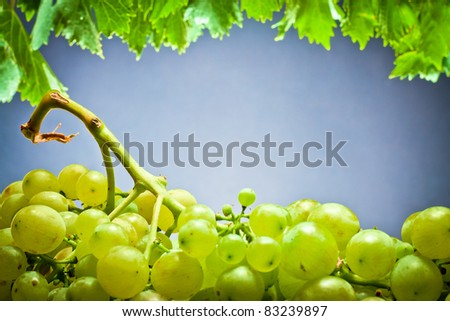 ,Wine, grapes,grapevine and wineglass, - stock photo