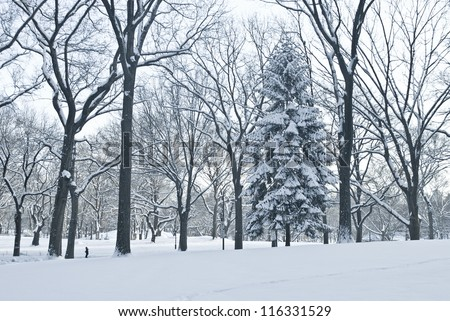 """""""Winter Scene Central Park"""" A blue toned Winter view of Central Park in New York City after a fresh snowfall. - stock photo"""