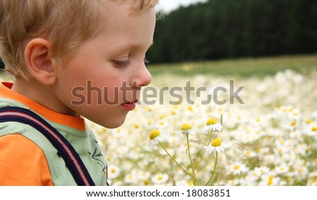 3 years boy smiling on a daisy field - stock photo