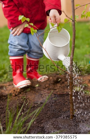 4 years old boy in a red jacket, blue jeans and rubber boots is planting a thin tree and watering it from a nice white can. Spring planting on the green house lawn. Outdoor.