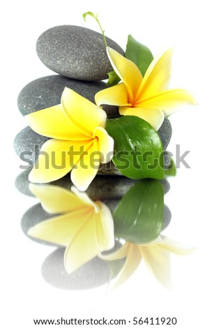 Yellow flowers on stacked stones - isolated on white - stock photo