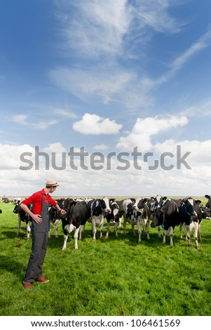young farmer in field with livestock cows