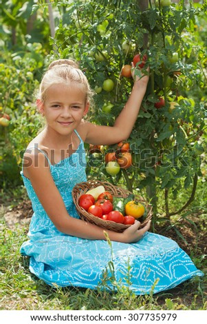 Young girl picking tomatoes in the summer garden - holding a basket with fresh vegetables - stock photo