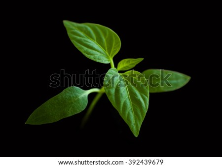 Young green plant on a black background - stock photo