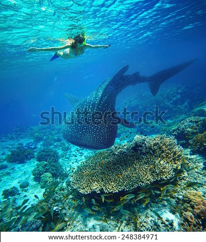 Young woman snorkeling underwater looks at a large whale shark. Philippines - stock photo