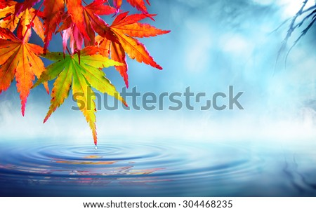 zen autumn- red maple leaves on pond - stock photo