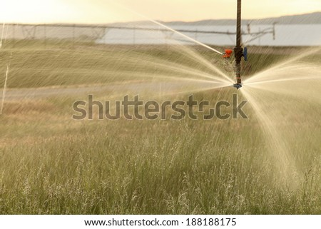 A agricultural sprinkler used to irrigate an grain field. - stock photo