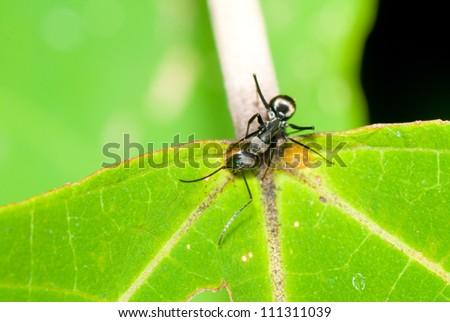 a ant on green leaf - stock photo