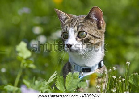 A attentive Cat in the green Grass - stock photo