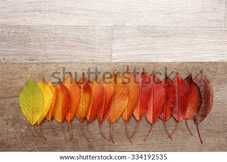 a Autumn leaves frame background - stock photo