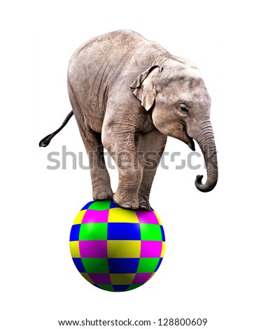 A Baby circus elephant balancing on a big ball