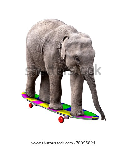A baby elephant having fun on a brightly colored skateboard. Isolated on white. - stock photo