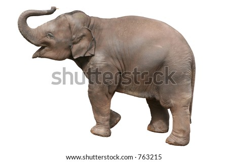 A baby elephant, isolated with clipping path. - stock photo