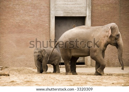 a baby elephant with her mother at the zoo