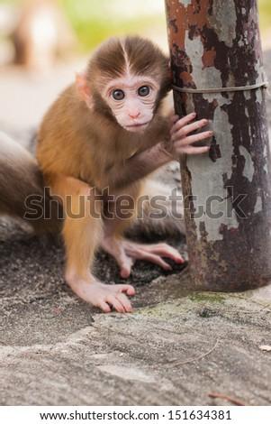 A baby monkey - stock photo