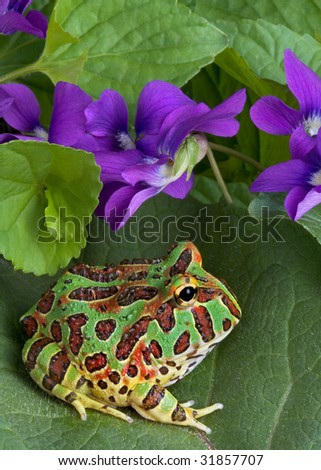 A baby ornate horned frog is sitting on a leaf near some spring wildflowers. - stock photo