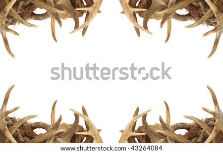 A background / border with whitetail deer antlers dressing the corners - stock photo