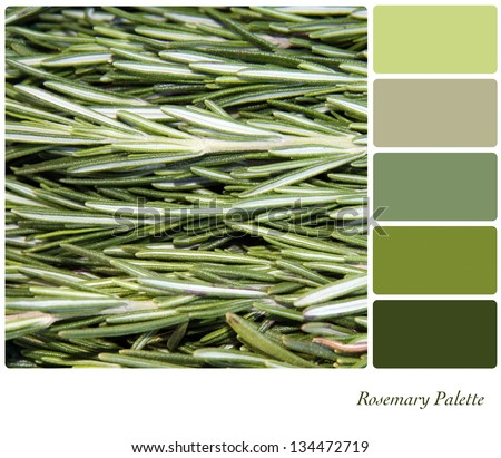 A background closeup of or rosemary leaves in a colour palette with complimentary colour swatches. - stock photo