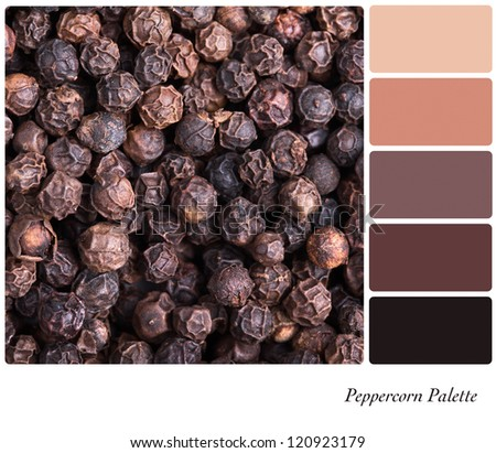 A background of black peppercorns palette with complimentary colour swatches - stock photo