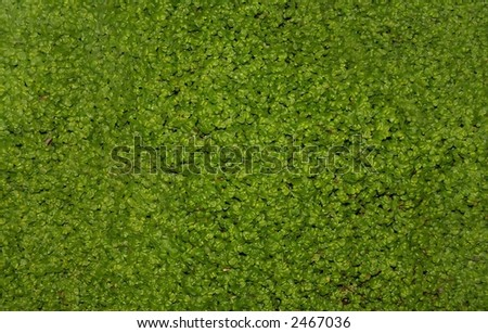 A background of clover. - stock photo