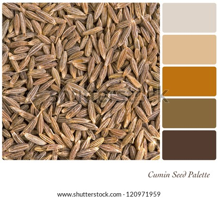 A background of dried cumin seeds palette with complimentary colour swatches - stock photo