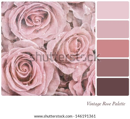 A background of faded pink roses in a colour palette, with complimentary colour swatches - stock photo