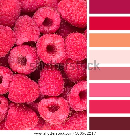 A background of fresh raspberries, in a colour palette with complimentary colour swatches. - stock photo