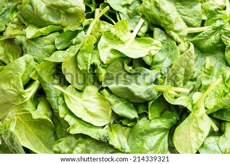 A background of fresh spinach leaves. - stock photo