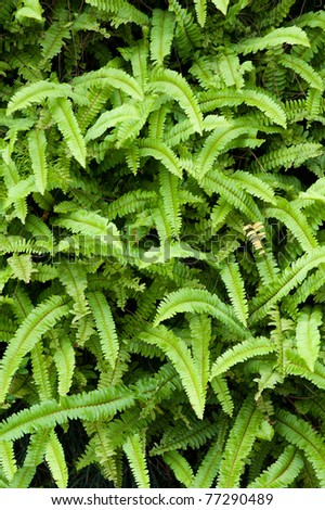 a background of green ferns - stock photo