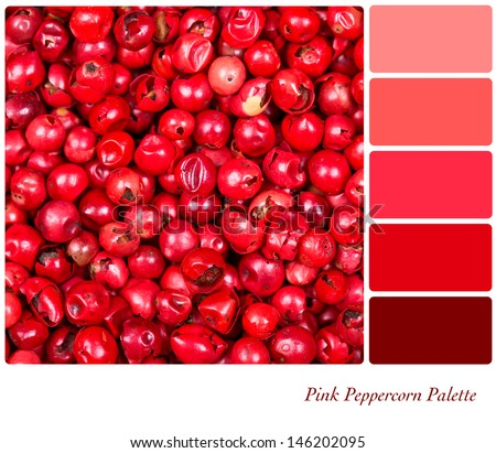 A background of pink peppercorns in a colour palette, with complimentary colour swatches - stock photo