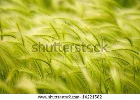 A background of wild grass growing