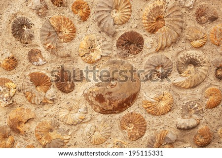 A background texture of ammonite fossils embedded in rock. - stock photo