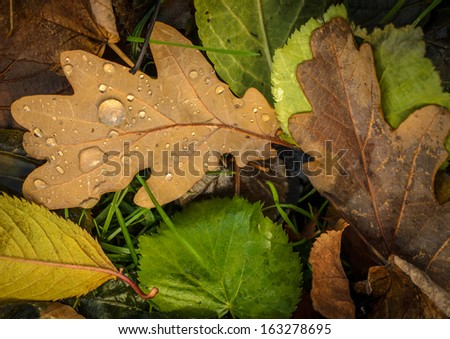 A Background Texture Of Wet Autumn Leaves - stock photo