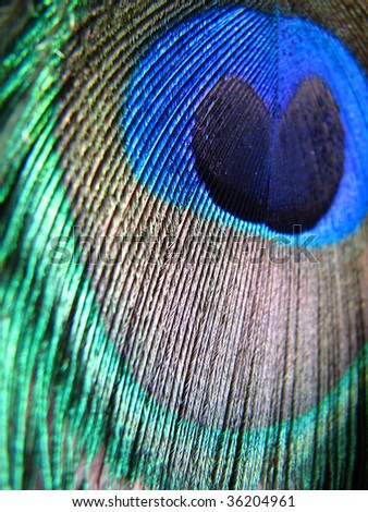 A background with a macro view of the pattern on a peacock feather with exotic colors.