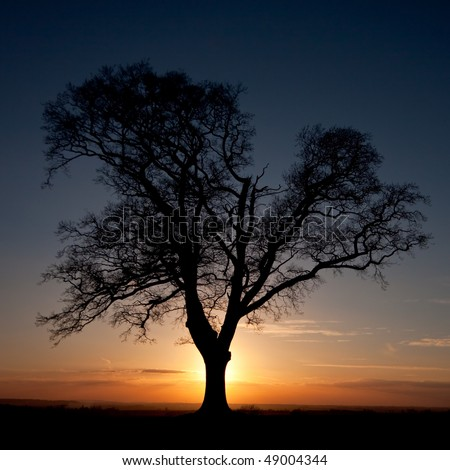 A backlit silhouetted tree standing on a hilltop in front of a colourful sunset sky. The tree is bare and standing alone.