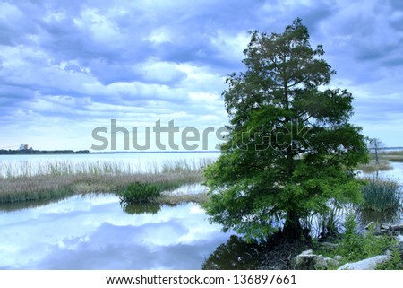 A bald cypress tree on the shore of a lake at the dawn of a cloudy day, - stock photo