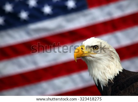 A bald eagle poses in front of an American flag. - stock photo
